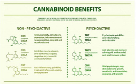 cannabinoid benefits